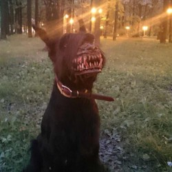 Monster idea? Muzzle turns dog into werewolf