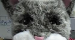Furry cosyplay goes futuretech robotic