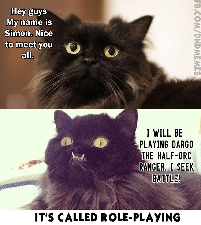 cvs cat litter