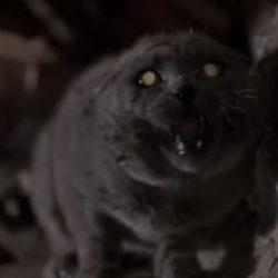 The supercut – it's just a cat