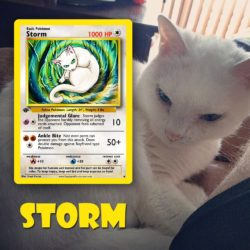 Your pet drawn as a Pokemon - Storm